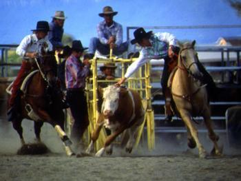 骑马套牛竞技1