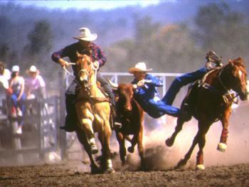 骑马套牛竞技2