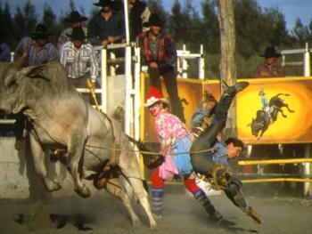 骑马套牛竞技3