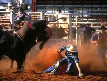 骑马套牛竞技4