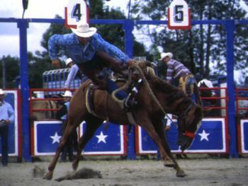 骑马套牛竞技5