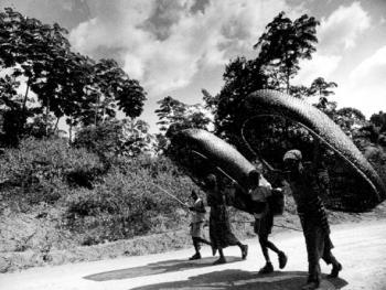 """中非原始森林中的""""俾格米""""部落"""