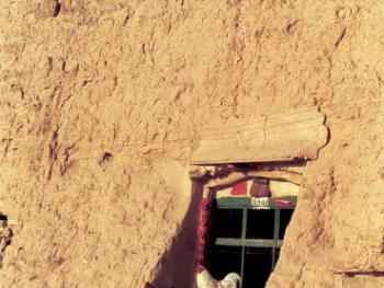 武文秀家养的三只鸡,经常站在窗台上晒太阳
