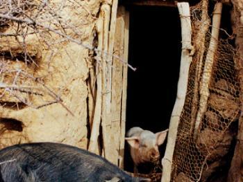 武文秀家的长城猪圈
