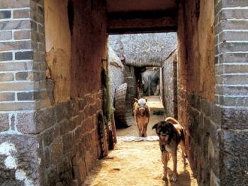 """(99年2月)""""接山""""形成的大院门洞走廊,纵深幽长,颇具农家大院特色"""
