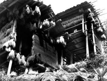 (1998年、苗、红水乡)苗家的谷仓也采用吊脚楼的建筑形式,建在自家房前屋后或地头田边,没有人染指他人的稻谷