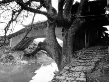 泰顺廊桥06