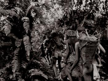 俾格米人―森林之子