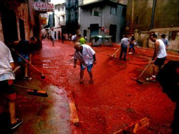 西红柿节12