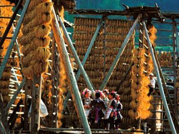 7.禾凉架是侗族建筑中又一绝,侗乡盛产糯米,每到秋天收割时,人们把割来的禾谷晒在溪边的禾凉架上,架下还搭一木平台,用来晒脱粒后的禾谷,成片的金色禾凉组成一个色彩斑斓的世界。1998年11月,从江县