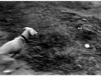 大荔的细狗撵兔07