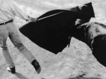 4.死亡之舞——斗母牛,选出优秀好斗的母牛。