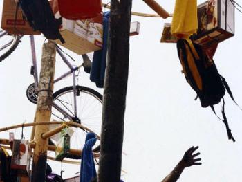 爬槟榔树比赛11
