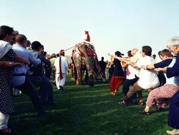 大象节06