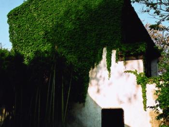 3.古宅被绿色植物点缀其中,使人耳目一新,更觉古色古香