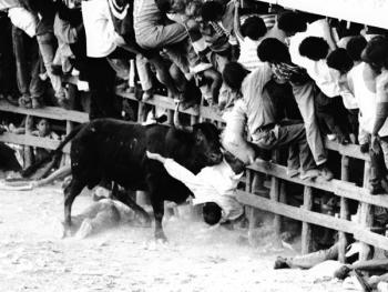 哥伦比亚斗牛10