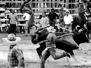 哥伦比亚斗牛09
