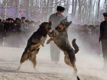 维吾尔的民间体育运动04