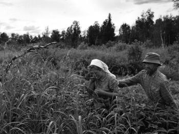 信徒在Kochumdek村附近森林里的丰收的田地里。