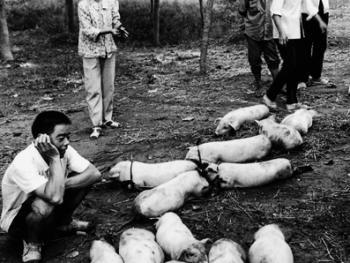 猪市经纪人03