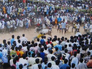 印度南部的迦里卡图节12