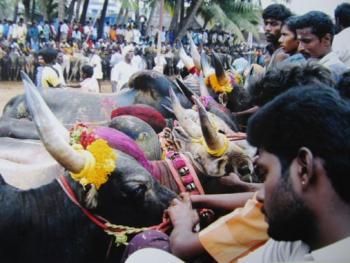 印度南部的迦里卡图节02