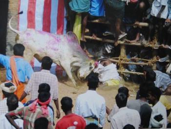 印度南部的迦里卡图节