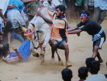 印度南部的迦里卡图节06