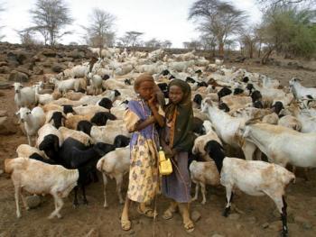 肯尼亚的游牧人―嘎巴拉