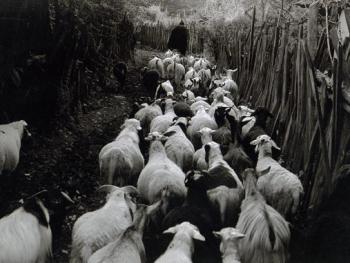 秘密森林里最后的母系氏族09