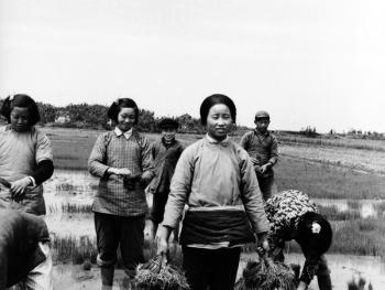 江南水乡春天的农事活动03