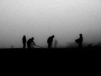挖土豆的人们
