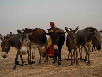 伊朗的游牧民族卡什加人05