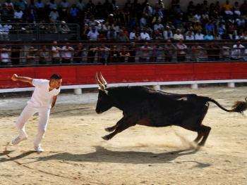 卡玛格地区的斗牛06