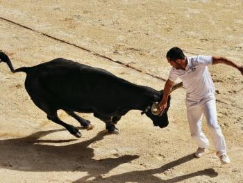 卡玛格地区的斗牛07