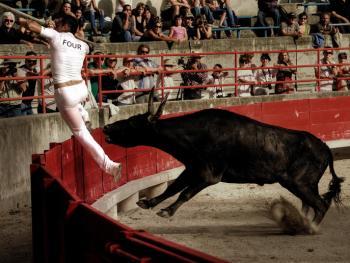 卡玛格地区的斗牛08
