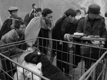 牲畜市场上的彝族人10