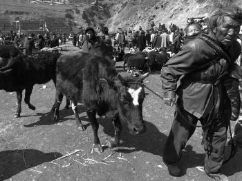 牲畜市场上的彝族人08