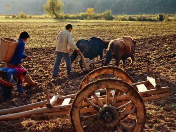 千年木轮车10