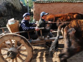 千年木轮车03