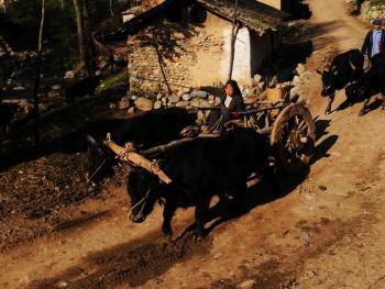 千年木轮车05