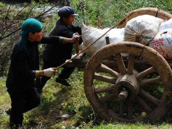千年木轮车06