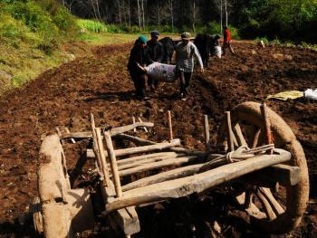 千年木轮车09