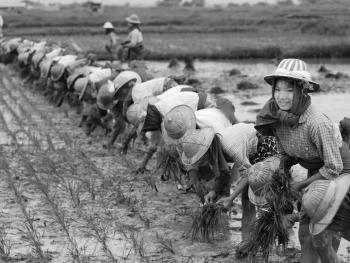 劳作中的缅甸妇女06