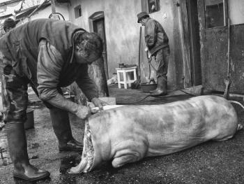 宰猪的季节05