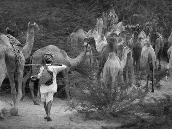 普什卡骆驼节10