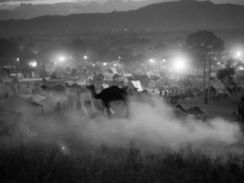 普什卡骆驼节11