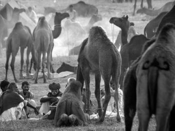 普什卡骆驼节05