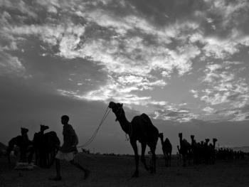 普什卡骆驼节09