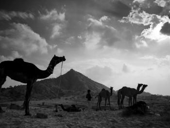 普什卡骆驼节08